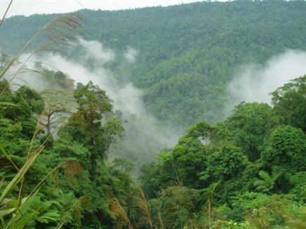 1003681992-climat-jakarta-veut-rassembler-les-pays-abritant-les-forets-tropicales.jpg