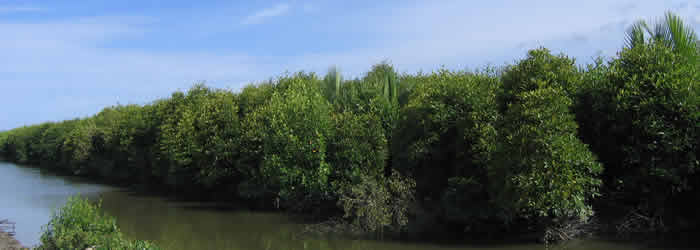 restauration-mangroves-1