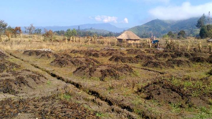 El Niño en Papouasie-Nouvelle-Guinée : au moins une dizaine de millions de dollars nécessaires en urgence