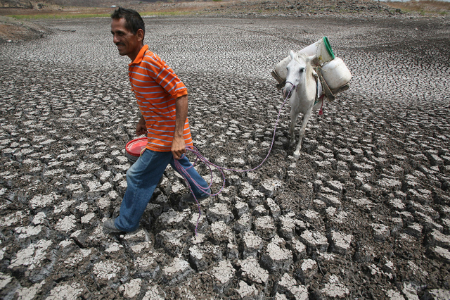 Les graves sécheresses et les inondations catastrophiques qui touchent aujourd'hui les zones tropicales et subtropicales portent la signature de l'actuel Nino. Sur l'image, au Nicaragua, un paysan marche sur ce qui reste d'un lac. Image: Reuters