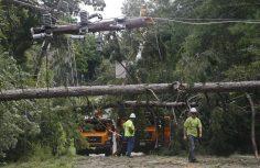 Enlèvement des arbres abattus au cours des opérations de nettoyage à la suite de l'ouragan Hermine à Tallahassee - 02/09/2016. Photo par Phil Sears / REUTERS