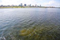 Eaux usées partiellement traitées dans la Baie de Tampa le 06/09/2016 - Source : Tampa Bay Times