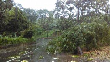 Photo CHRISTINE CUPIT A Rivière l'or, beaucoup de branches sont tombées sur la route sous l'effet des fortes rafales de vent. (Martinique le 28/09/2016)