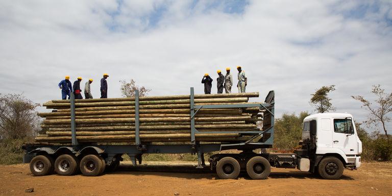 Des troncs d'eucalyptus sont transformés en poteaux afin de raccorder tous les foyers kényans au réseau national d'électricité. CRÉDITS : MATTEO MAILLARD