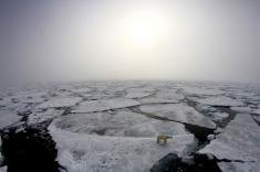 Credit: Marcos Porcires/Norwegian Polar Institute